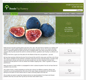 The Fig NUrsery